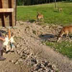 Het hertenkamp bij Fuchsmichelhof